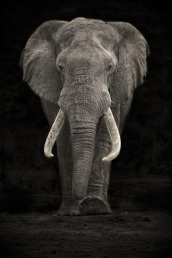 Espectacular mastodonte.