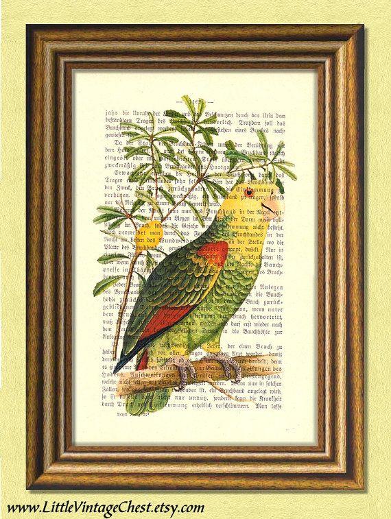 Black Friday! Buy 1 Get 2! - PARROT & LEMON Parakeet Bird Wall Art by littlevintagechest, $7.99