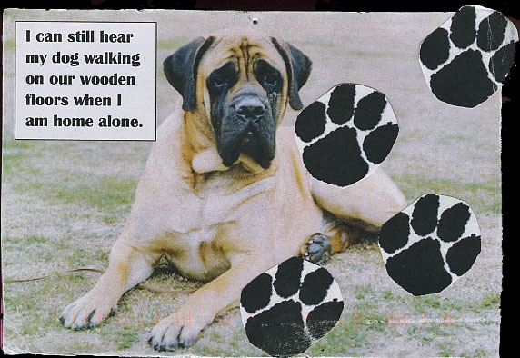 I can still hear my #dog walking on our wooden floors when I am home alone. #PostSecret #death #pets