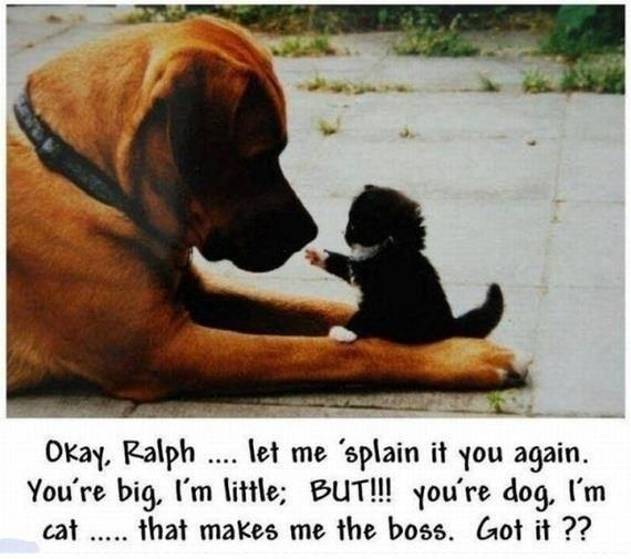 let me explain funny cute animals cat dog pets lol kitten humor funny animals... (EXACTLY!!! Of COURSE!!!) ~Saved by Kit Kat