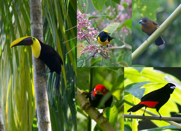 The #birds of #CostaRica - photos from one of our travelers. #smallshipcruise #birding #toucan