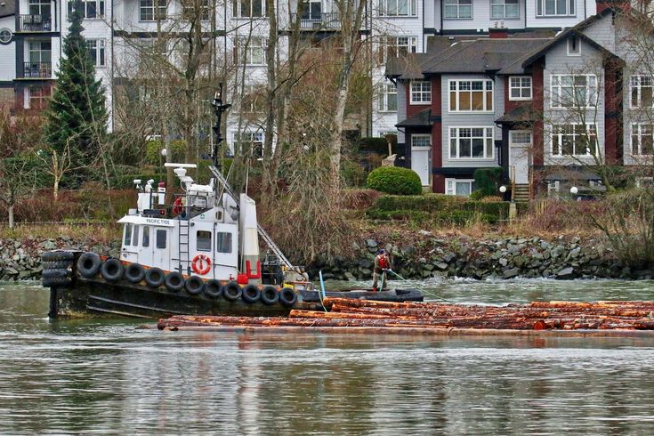 "Catherwood Towing's tugboat ""Pacific Tyee"" works with a log boom in the Fraser River. Click image to enlarge."