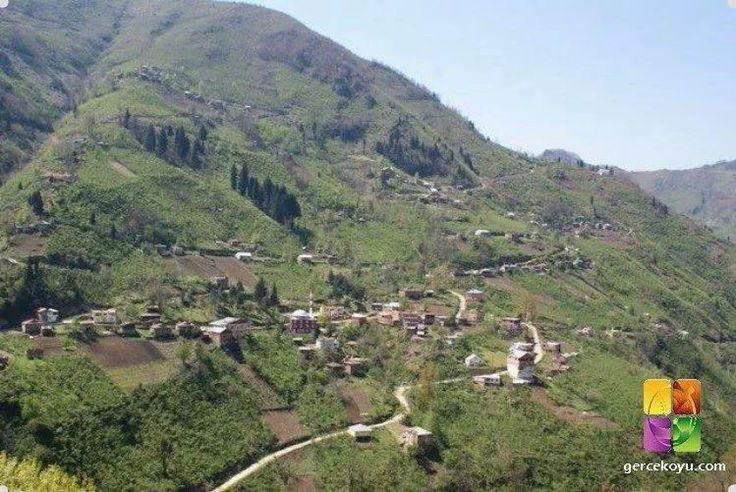 Gerce köyü ordu türkiye.