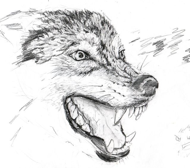 Wolf Drawings: Angry_wolf_by_silmasan-d32cgkx.jpg (639×563)