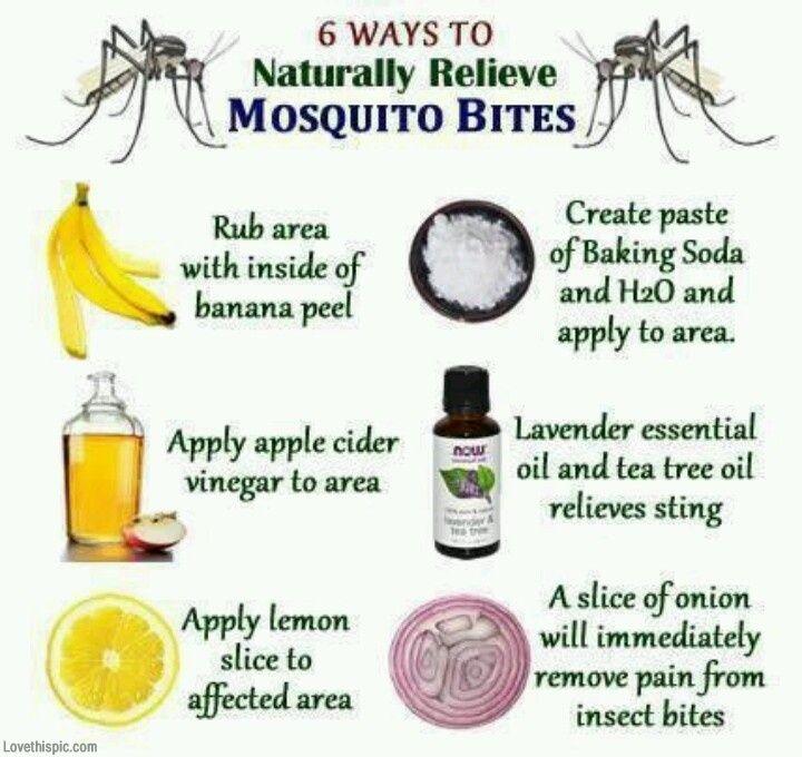Remedios para picadura de mosquito