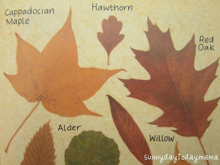 sunnydaytodaymama: 'Autumn' by Ruth Thomson and Peter Millard.