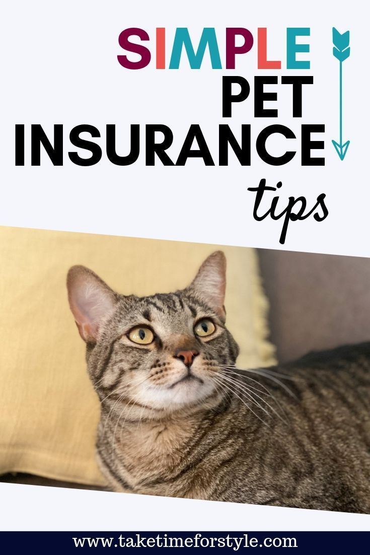 Ad Cat Lovers Will Rejoice Over The Peace Of Mind Pet Insurance