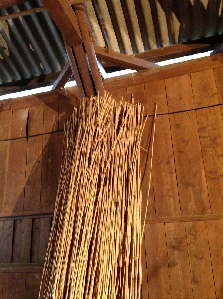 [1]これが近江八幡で刈ったヨシ!乾燥したもの。 3m弱あります。 体験で刈ったのはよしずにするには、細いのが多かったそうで、太いのにより分けたとのこと。 ヨシは地面に近い下の方が太く、上にいくにつれて細くなっています。