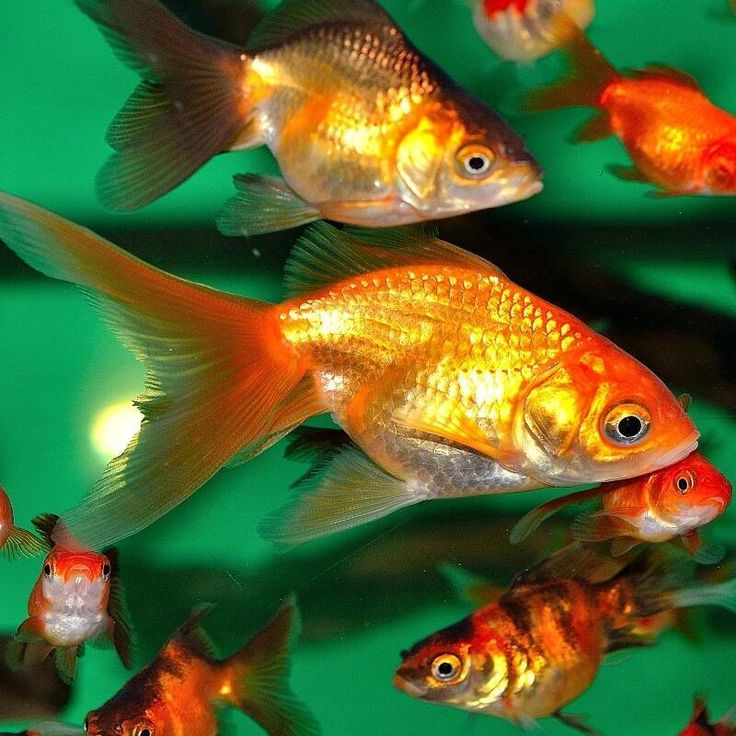 Magazyn Akwarium czasopismo akwarystyczne Aklimatyzacja ryb