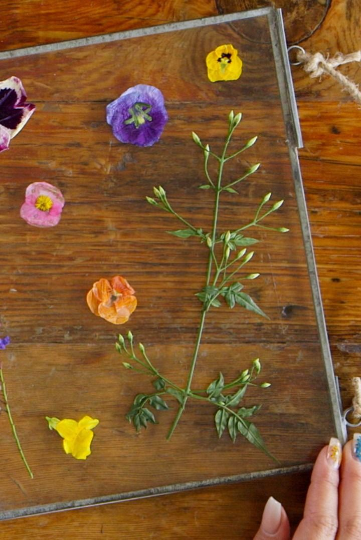 This pressed-flower DIY will brighten any room.
