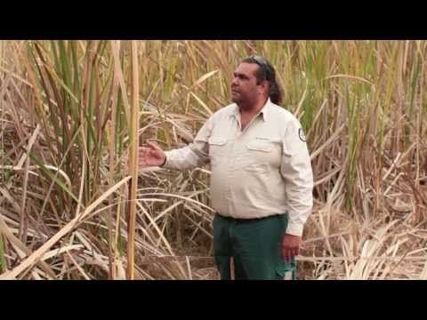 ▶ Stories from Ngunnawal Country - Jerrabomberra Wetlands - Life in the wetlands - YouTube