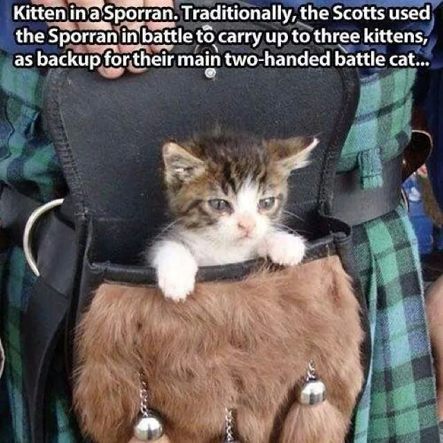 Scottish Fluff!