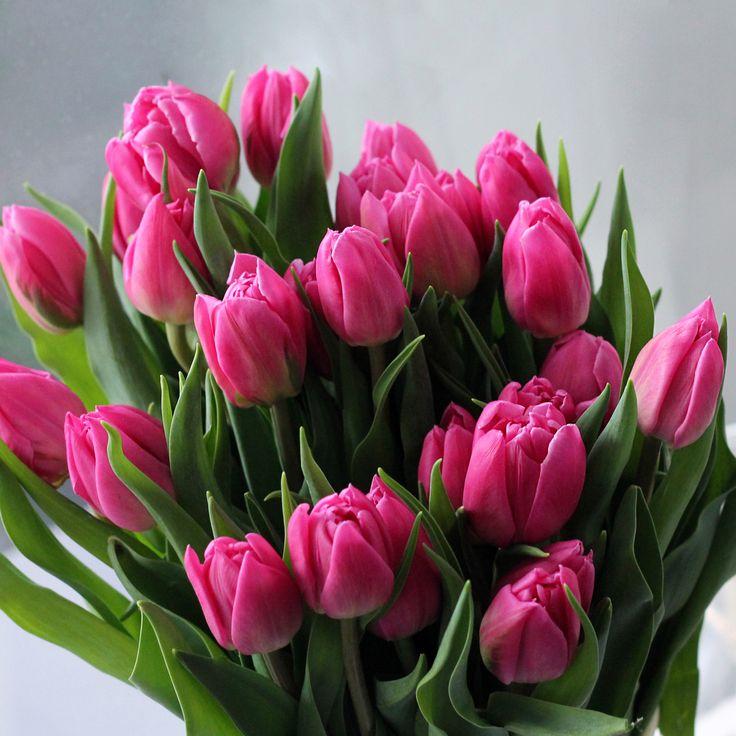 фотографии самых красивых тюльпанов стрижка номинирована самой
