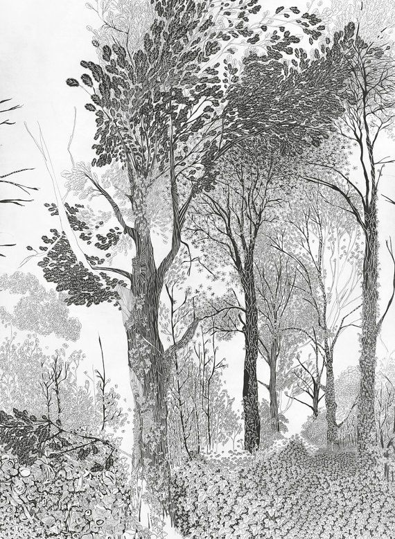 Tree drawing, Woodland Print, forest tree art print, beautiful, detailed, intricate pencil illustration, in black & white, New Shop Berlin