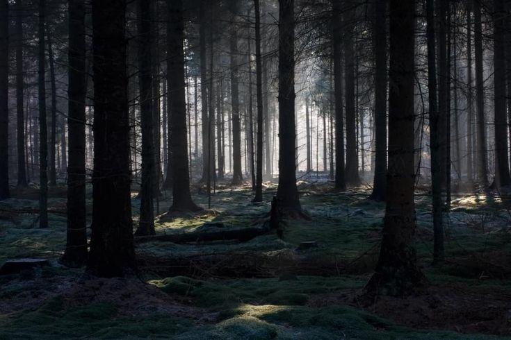Floresta Negra, na Alemanha – Como parte de uma cadeia de montanhas, essa floresta é composta por pinheiros, trilhas de ciclismo e caminhada. A área verde de tons escuros serviu de inspiração para contos dos Irmãos Grimm.