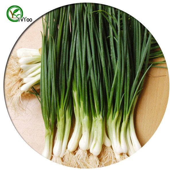 Chive Seeds for Your Garden; Plant non-GMO organic vegetable seeds, 100pcs