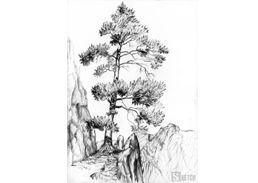 Old pine drawing. Old pine in the mountains. www.kurs-rysunku.com.pl