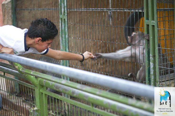 #Qalqilya #Zoo