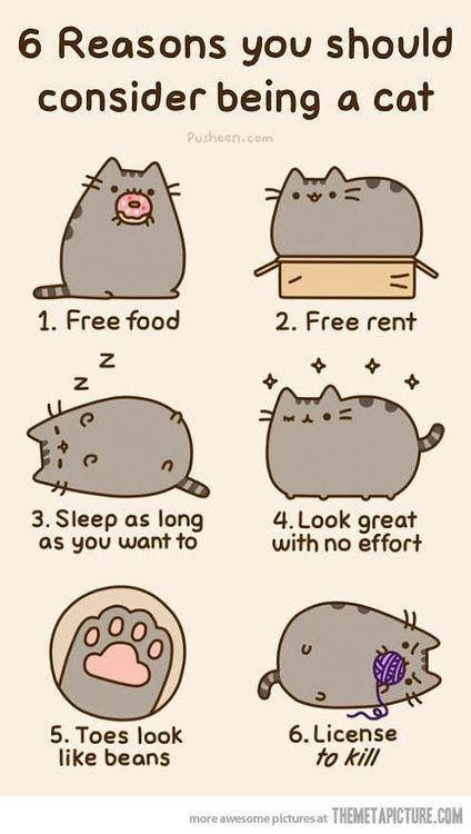 6 reasons to be a cat