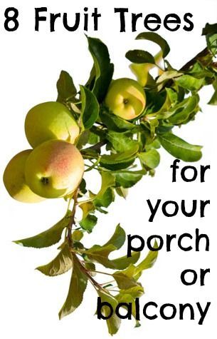 I want to grow my own urban orchard with these 8 fruit trees