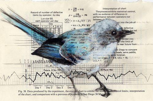 Cerulean Blue Bird...