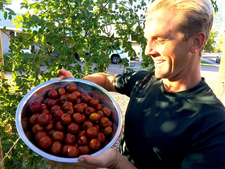 Every Home Garden Should Have this Fruit Tree - Chinese Date Tree also called a Jujube Tree!