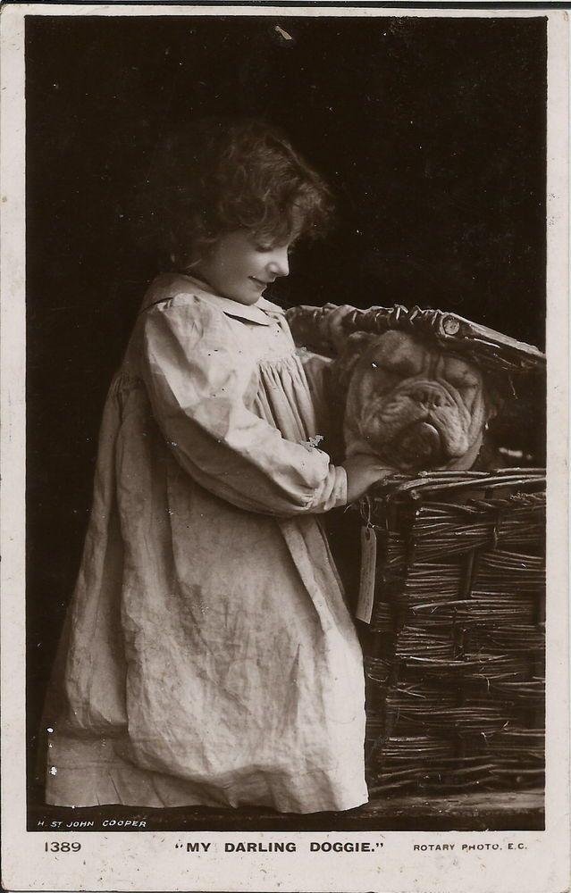 BULLDOG IN BASKET WITH CHILD REAL PHOTOGRAPHIC DOG POSTCARD