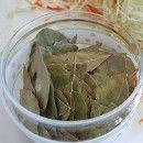 cultivar laurel