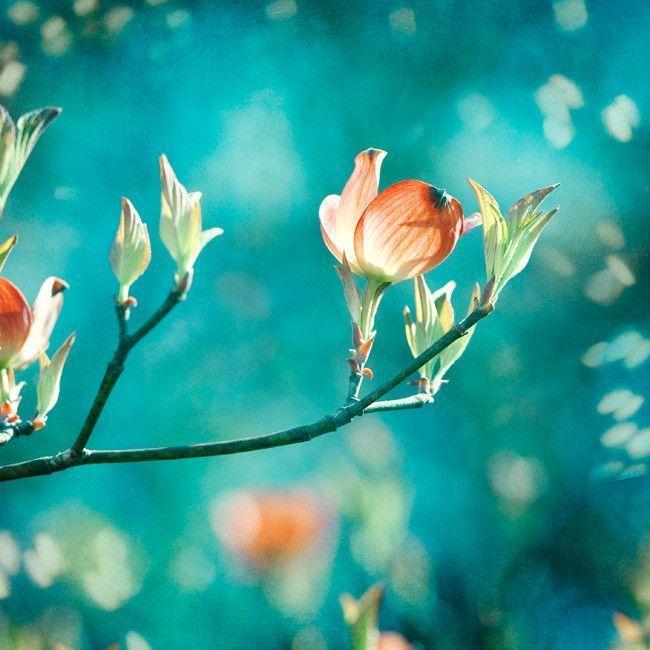 """Enchanting"" Teal Nature Art Print by Carolyn Cochrane Photography | Turquoise Orange Wall Decor | Aqua Peach Flower Photo"