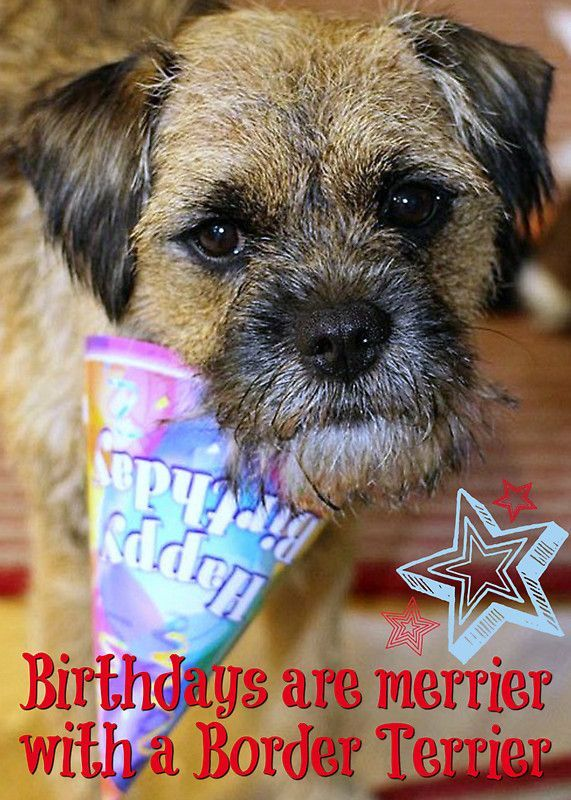Image Result For Birthday Card Border Terrier With Images