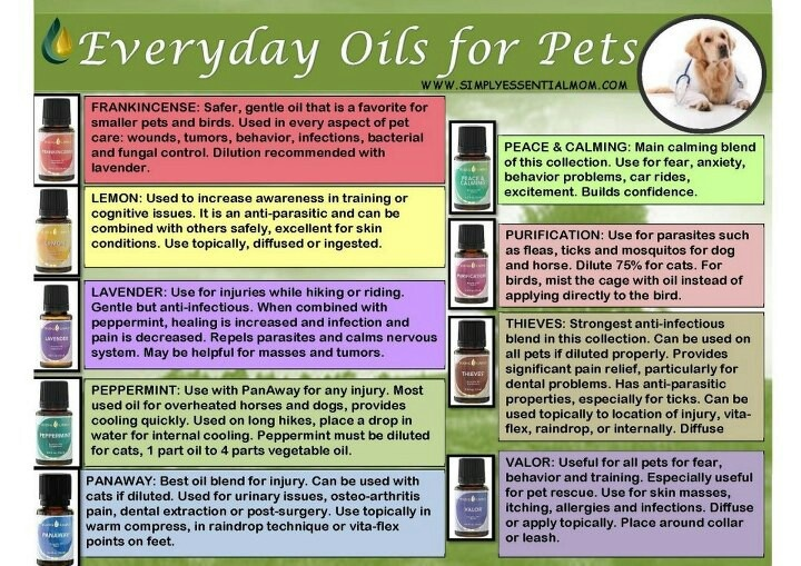 17 best images about essential oils for pets on pinterest plugs young living pets and first aid. Black Bedroom Furniture Sets. Home Design Ideas
