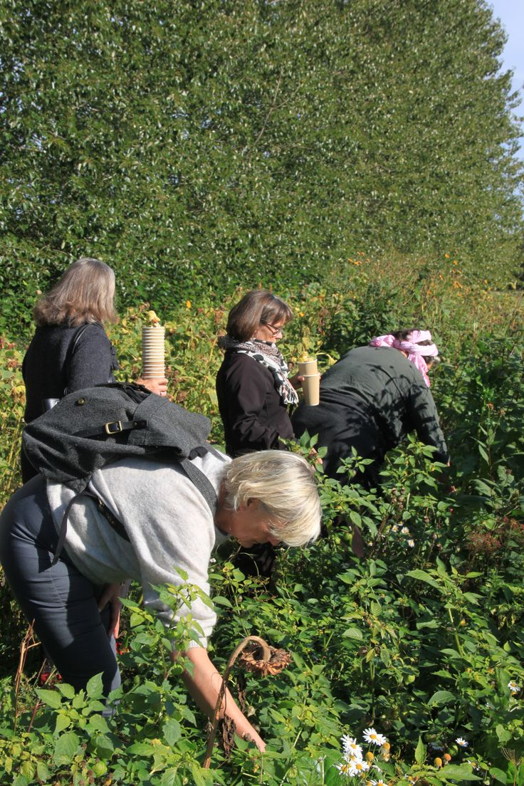 Seed saving Course at Fuglebjerggaard, with Camilla Plum,  book at www.fuglebjerggaard.dk