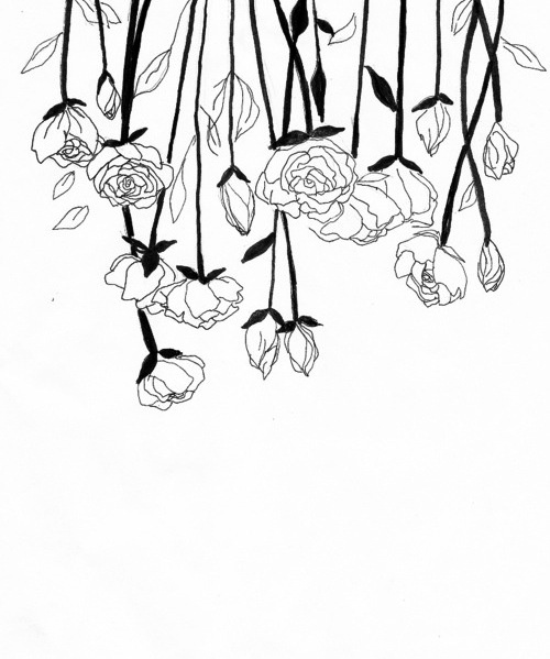 Flower Plant Line Drawing : Best plant drawing images on pinterest water colors