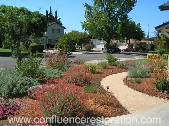 Confluence designs, builds, and maintains beautiful California native plant gardens