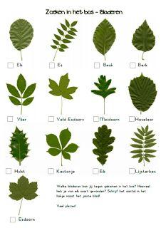 Werkbladen herfst - Zoeken in het bos. Visit: www.emilieslanguages.com or https://www.facebook.com/emilieslanguages #emilieslanguages #dutch #darwin