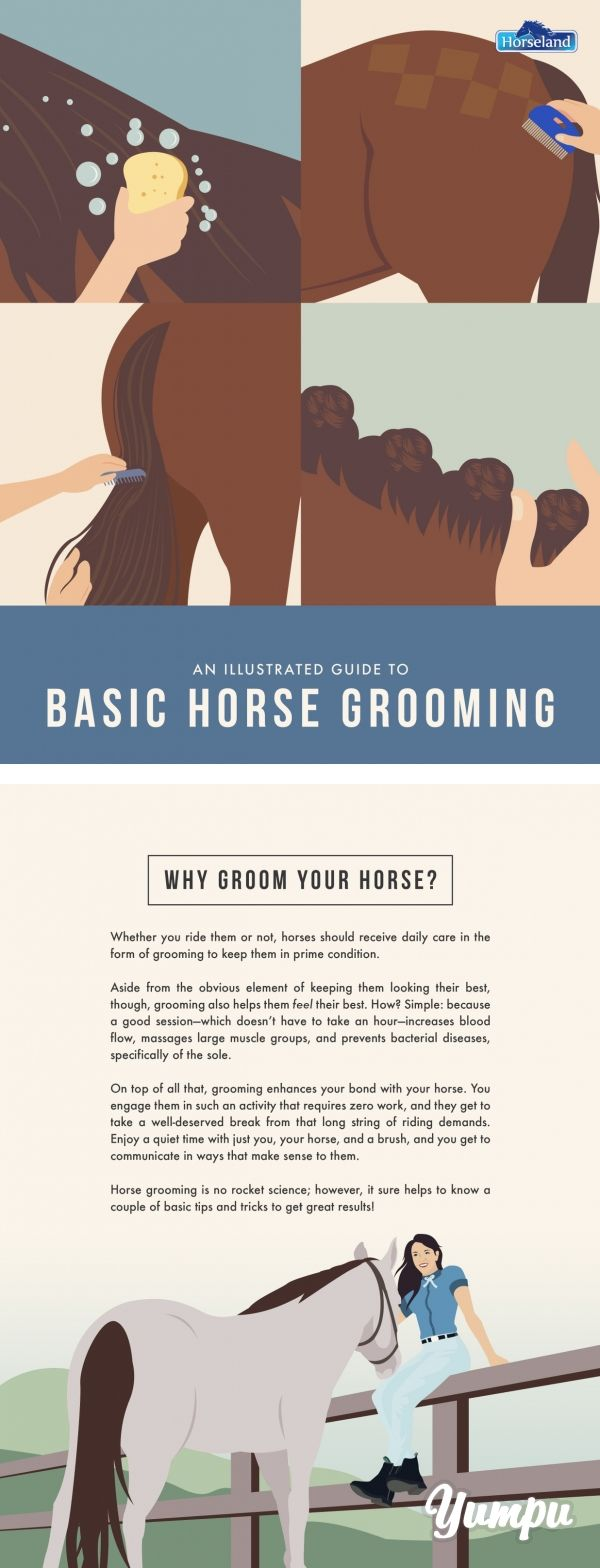 An Illustrated Guide to Basic Horse Grooming - Magazine with 17 pages: Do you know how to properly groom your horse? There are four major components you should know: bathing, plaiting, quarter marks, and false tails. It's not rocket science so with the right tips you can easily make your horse look great. Check out this PDF created by Horseland.