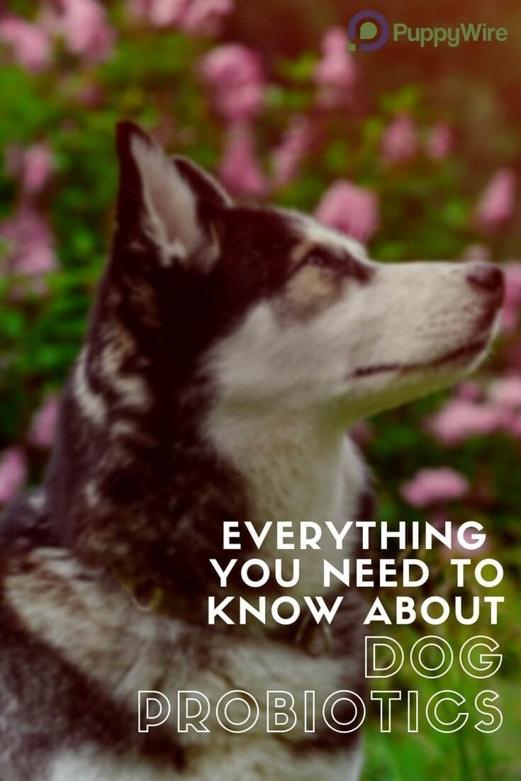 This guide covers the 5 best dog probiotic products, benefits of dog probiotics, side effects, answers common questions, and tells you how to choose a probiotic for your dog for both puppies and adult dogs.