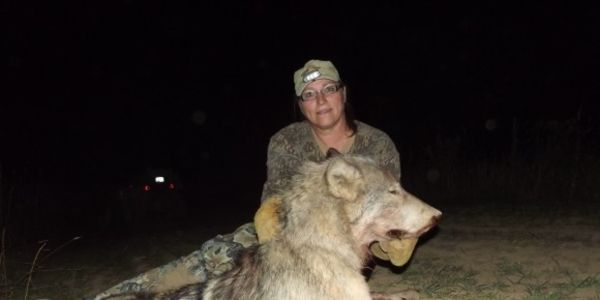 Unnecessary and cruel killing of wolves. These animals need to remain with their pak families, they have... (7729 signatures on petition) please sign & share