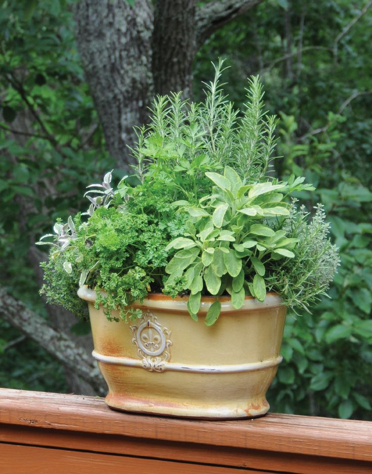 "Learn how to grow easy herbs that look great on your patio from the book ""Easy Container bos"