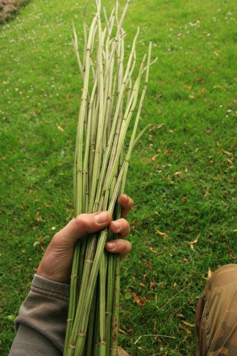 How to strip & prepare Nettle fibres for cordage making