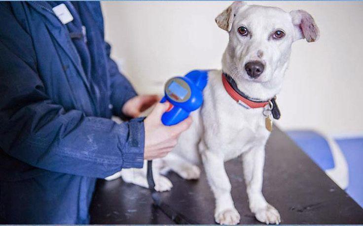 Στη Δικαιοσύνη προσφεύγουν κτηνίατροι