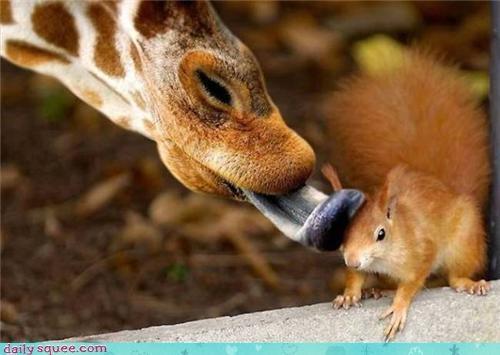 Love Giraffes! :)