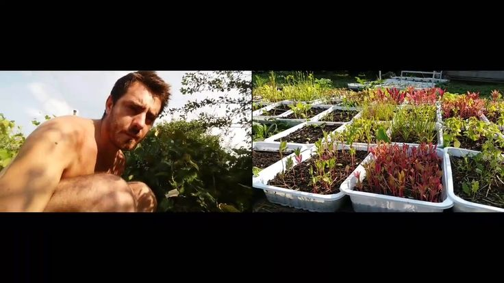 A Tiny Farm - The Nursery - Transplanting Pampas GrassA Tiny Farm - The Nursery Testing Dual Camera