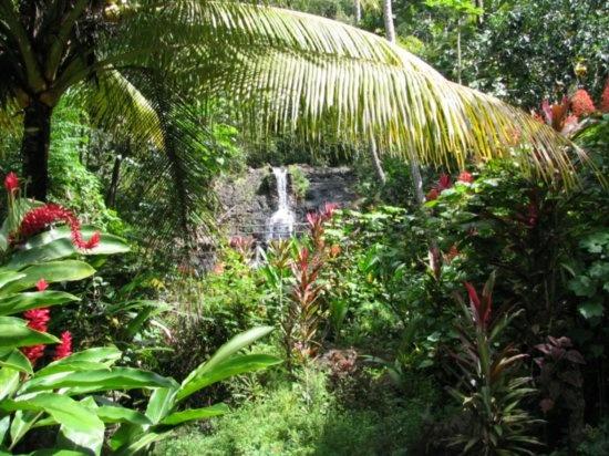 rainforest - st. lucia