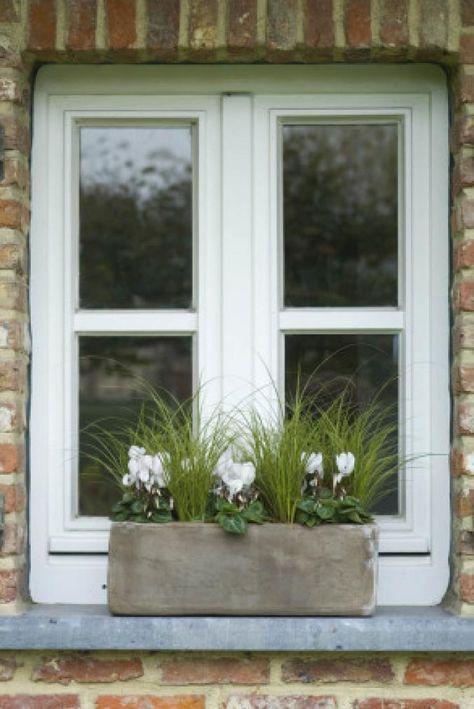 Notre top 7 des plantes d'hiver-Carex et cyclamen