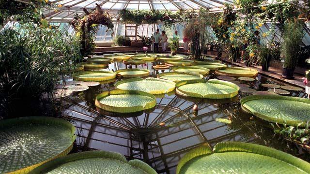 Pin Auf Botanischer Garten
