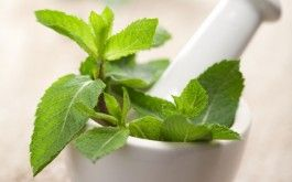 """Peppermint tea benefits are among the most popular and easiest to experience among the """"mint"""" family. Peppermint can relieve nausea, gas, and indigestion."""