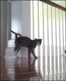 Time to bounce.   The Best Cat Gif Post In The History Of Cat Gifs