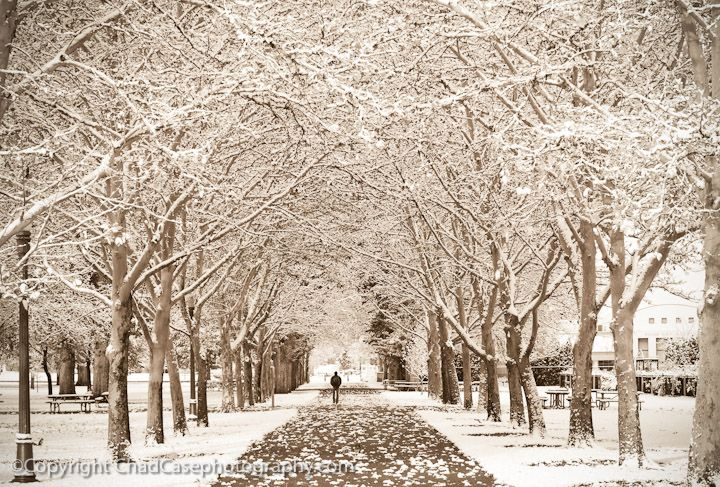 ... in Julia Davis Park lined by snow covered trees in Boise, Idaho