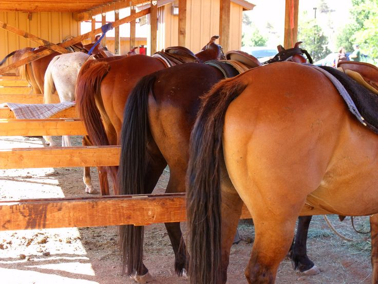 How to Clean a Mare's Female Parts -- via wikiHow.com
